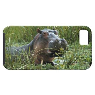 África, Kenya, Masai Mara NR. Um hipopótamo da mãe Capas Para iPhone 5