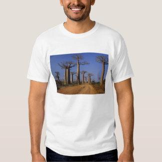 África, Madagascar, Morondava, avenida do Baobab Camiseta