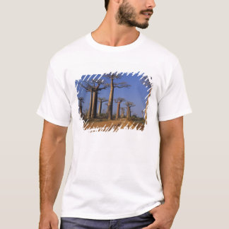 África, Madagascar, Morondava, avenida do Baobab T-shirts