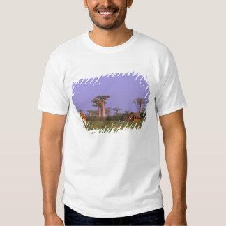 África, Madagascar, Morondava. Baobabs T-shirts