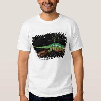 África, Madagascar, reserva especial de Ankarana Camiseta