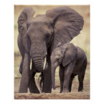 África, Tanzânia, parque nacional de Tarangire. 2 Impressão