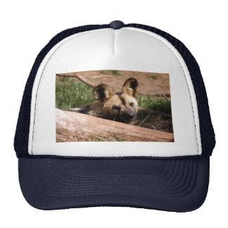 african-wild-dog-013 boné