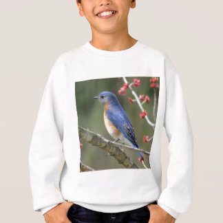 Agasalho Bluebird