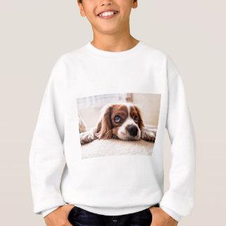 Agasalho Cão canino triste