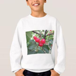 Agasalho Cerejas vermelhas de Montmorency na árvore no