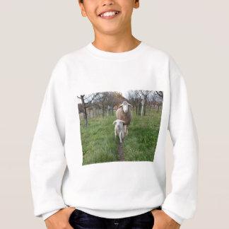 Agasalho Cordeiro e carneiros