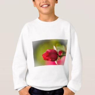 Agasalho Design ascendente próximo da rosa vermelha