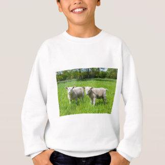 Agasalho Dois carneiros holandeses brancos no prado verde