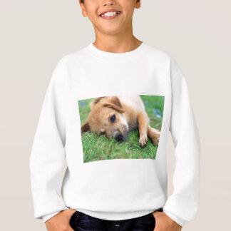 Agasalho filhote de cachorro