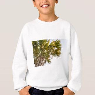 Agasalho Palmeira da costa leste Myrtle Beach famoso