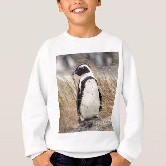 Agasalho Pinguim africano na praia