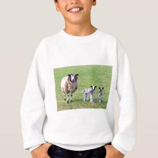 Agasalho Sira de mãe a carneiros com os dois cordeiros