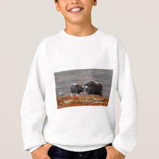Agasalho Um boi e uma vitela de Musk