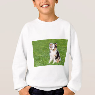 Agasalho Um cão novo do sheltie que senta-se na grama