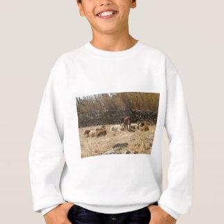 Agasalho Vacas
