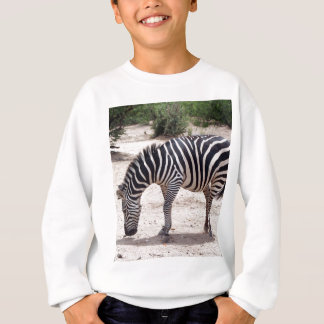 Agasalho Zebra africana no jardim zoológico
