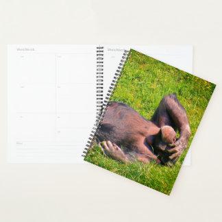 Agenda Chimpanzés engraçados
