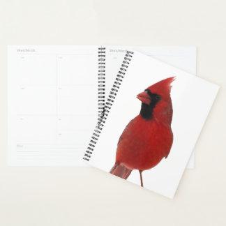 Agenda Natureza animal do pássaro cardinal