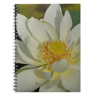 Água cremosa Lily.JPG Cadernos Espiral
