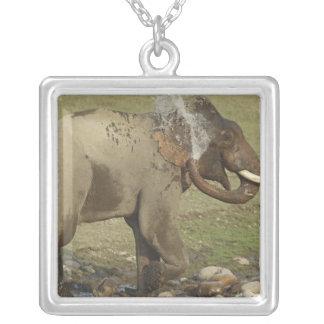 Água de pulverização elefante indiano/asiático, colar com pendente quadrado