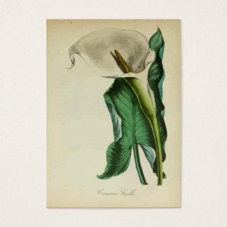 Aguarela botânica da flor | do lírio de Calla do Cartão De Visitas