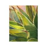 Aguarela do attenuata da agave por Debra Lee Baldw Impressão De Canvas Esticada