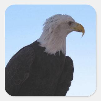 Águia americana adesivo quadrado