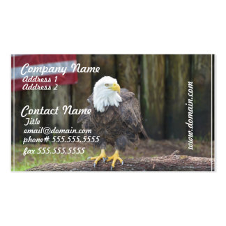 Águia americana americana empoleirada em um regist cartões de visitas