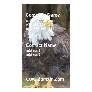 Águia americana americana empoleirada em um regist modelo cartões de visitas