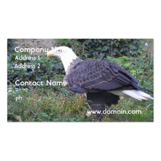 Águia americana americana ereta cartão de visita