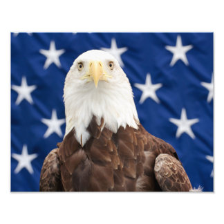 Águia americana com as estrelas impressão de foto