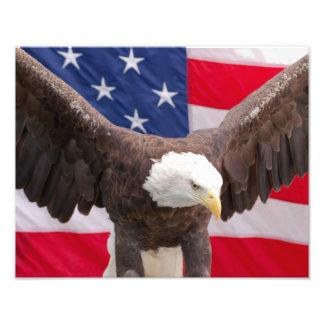 Águia americana com o impressão da bandeira impressão de foto
