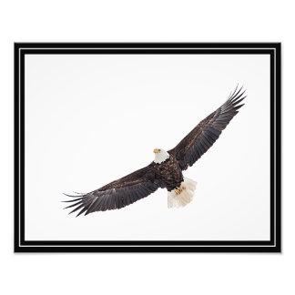 Águia americana em vôo impressão de foto
