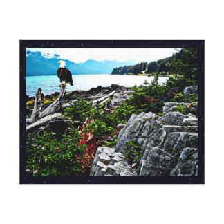 Águia americana empoleirada na costa de Alaska Impressão De Canvas Esticadas
