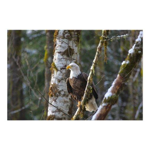 Águia americana nas madeiras artes de fotos