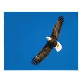 Águia americana no céu azul claro impressão de foto