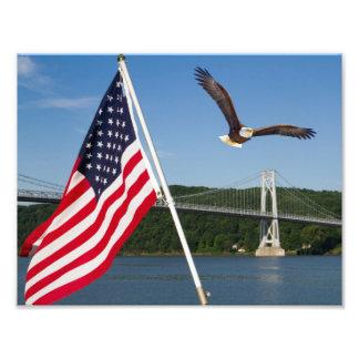 Águia americana (orgulho americano) impressão fotográfica
