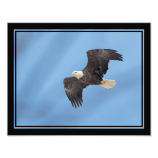 Águia americana que toma o vôo impressão de foto
