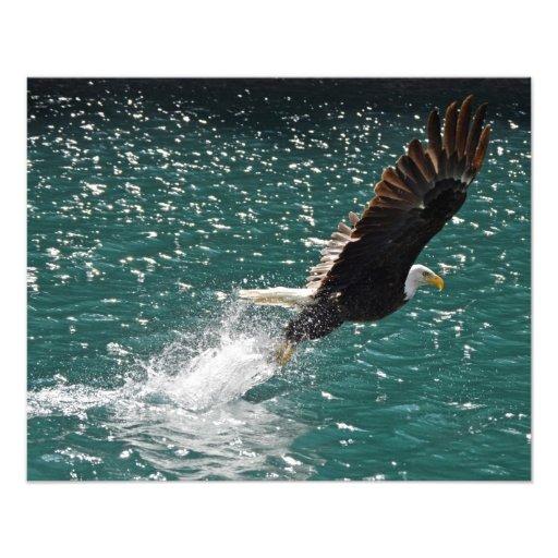 Águia americana que trava um peixe fotografias
