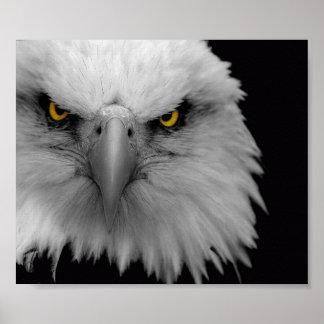 águia poster
