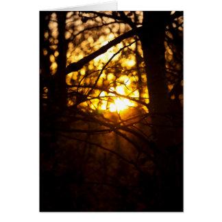 Álamos do por do sol cartão comemorativo