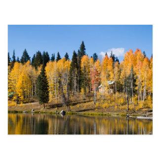 Álamos tremedores do outono nos primaveras da cartão postal
