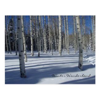 Álamos tremedores no cartão do inverno cartão postal