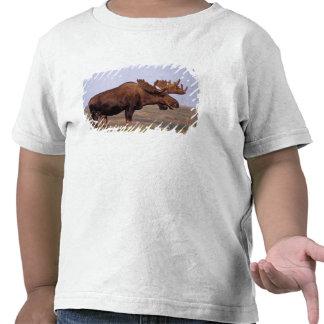 alces, alces do Alces, touro com grandes antlers T-shirt
