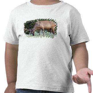 Alces de Bull com os antlers no veludo que pastam Camisetas