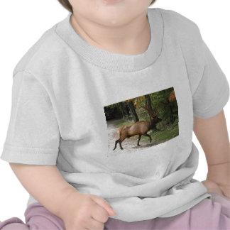 Alces grandes de Bull com grande Antler Camisetas