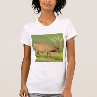Alces no veludo que andam, Colorado Camiseta