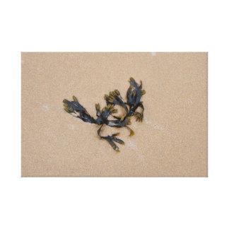 Alga em um Sandy Beach Cornualha Inglaterra Impressão De Canvas Esticada