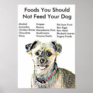 Alimentos você não deve alimentar seu poster do
